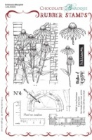 Echinacea Blueprint Rubber Stamp sheet - A5